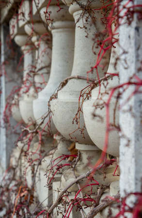 twining: Balusters twining vines of wild grapes