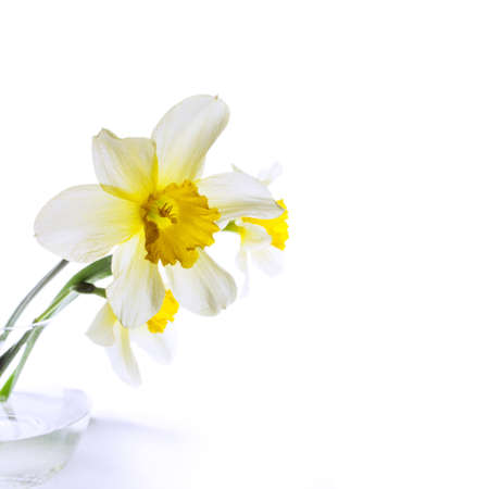 Narcissus in a glass vase photo in high key photo