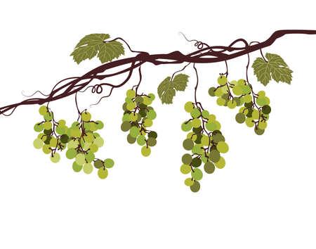 Sstylized graficzny obraz winorośli z różowych winogron Ilustracje wektorowe