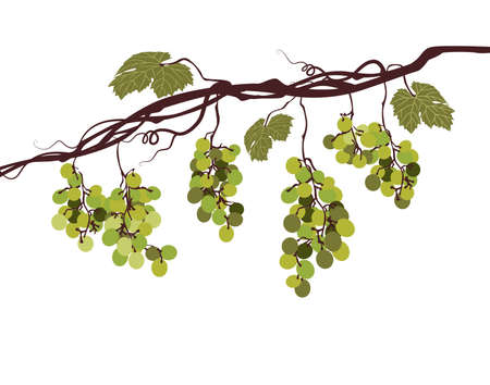 Sstylized graphic image of a vine with pink grapes