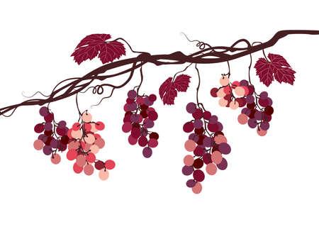 Stilizzata immagine grafica di una vite con l'uva rosa Archivio Fotografico - 45226770