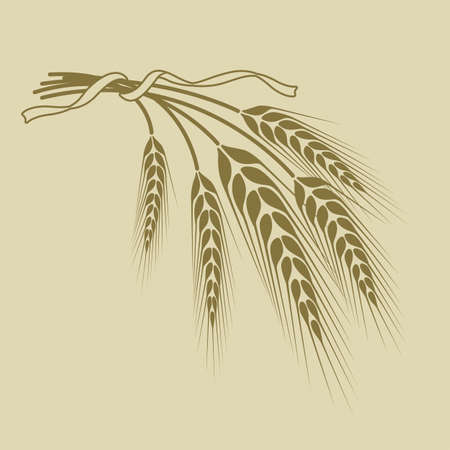 wheat tied with a ribbon on a beige background Vectores