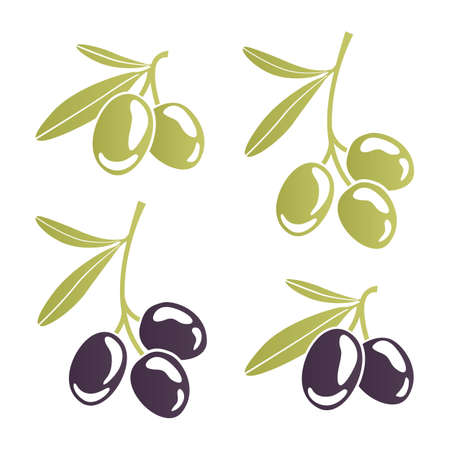 extra virgin olive oil: Vector image of stylized olive branches