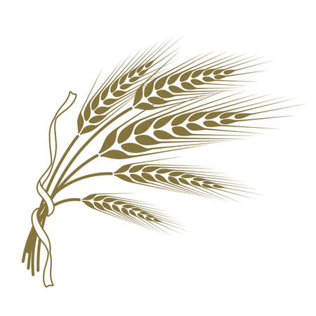 Spikelets pszenicy przewiązane wstążką Ilustracje wektorowe