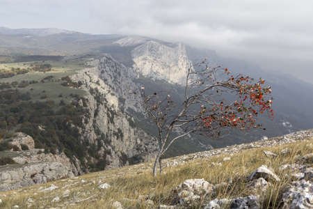 lonely tree in the mountains with bright red berries