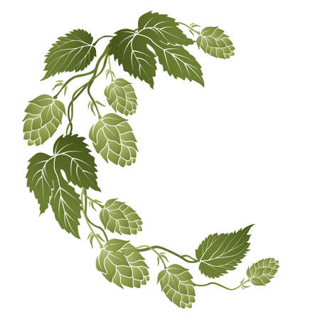 drawed: illustration of curved branches with cones of hops