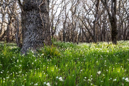 Spring forest meadow with lush green grass and flowers