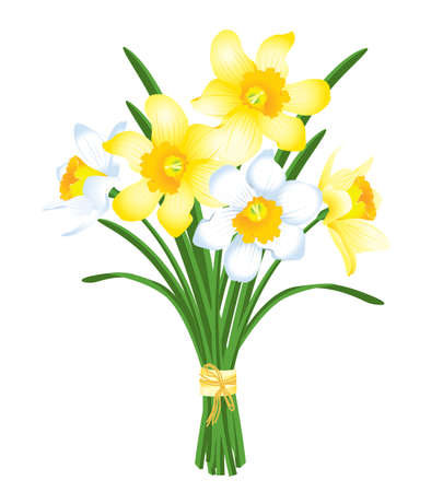 jonquil: spring bouquet of yellow and white daffodils Illustration