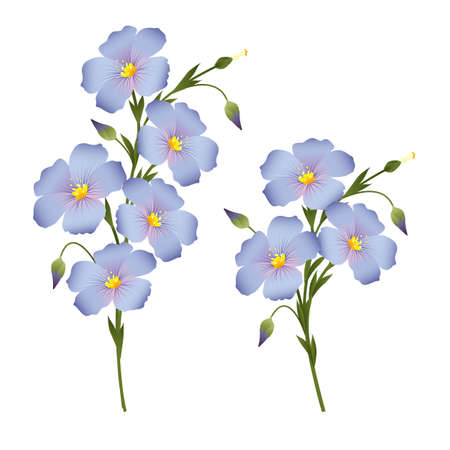 flax seed oil: Two sprigs of flowering flax, design element for labels, packaging Illustration
