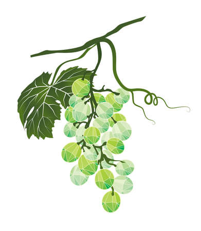 Bunch of green grapes stylized polygonal