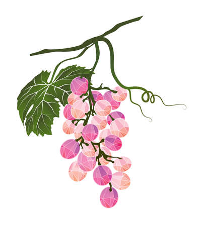winemaking: Bunch of pink grapes stylized polygonal
