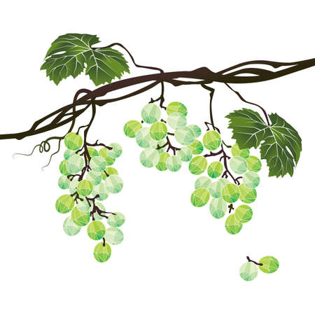 Stylized polygonal branch of green grapes on a white background