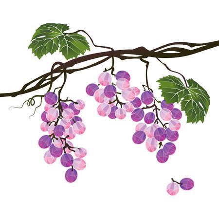 winy: Stylized polygonal branch of purple grapes on white background Illustration