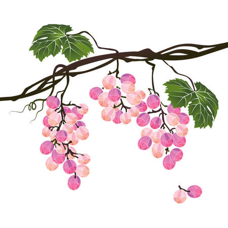 Stylized polygonal branch rose grapes on a white background