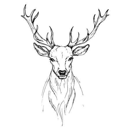 벡터 스케치 펜으로 고귀한 사슴 전면보기 일러스트