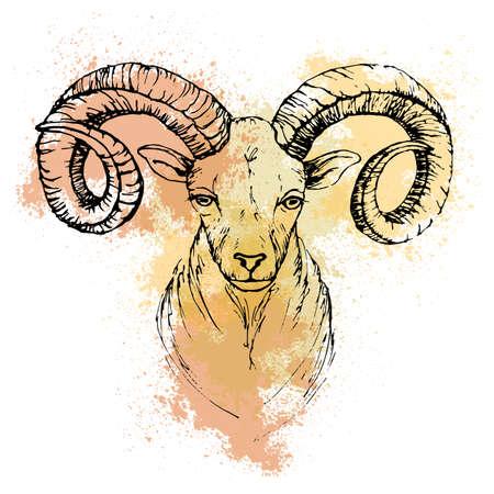 Skizze mit dem Stift von einem Berg Ziege Kopf auf einem Hintergrund von farbigen Aquarellflecken