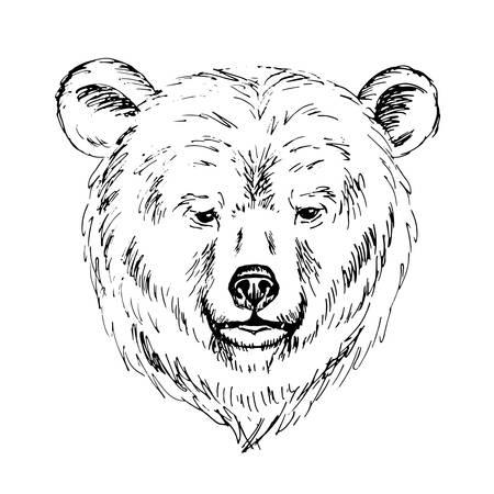 Sketch by pen of a bear  head Illustration