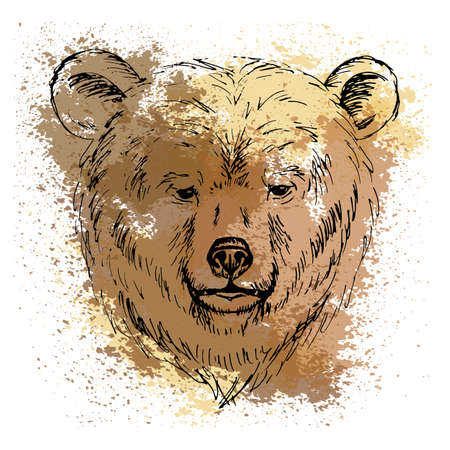 Sketch by pen bear head  on the background of watercolor stains Illustration