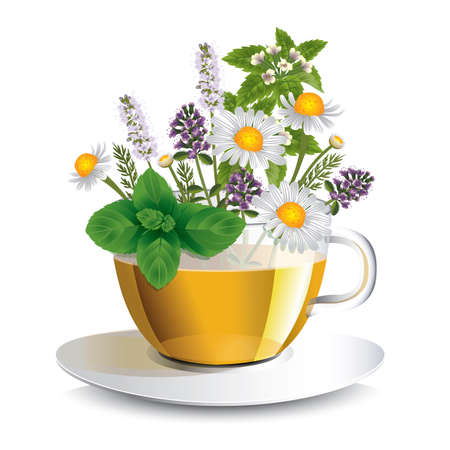 camomile tea: Herbal tea in a transparent cup with aromatic herbs, a conceptual idea for the label Illustration