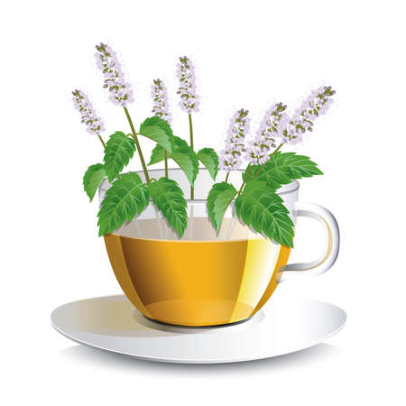 fragrant bouquet: Vector illustration aromatic mint  tea in a transparent cup with flowers, a conceptual idea for the label