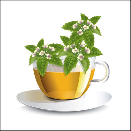 Vector illustration lemon balm  tea in a transparent cup with flowers, a conceptual idea for the label
