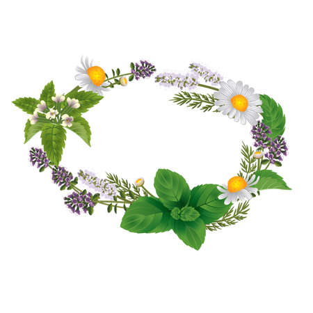 Vector oval ornament of herbs and flowers for labels of herbal tea or herbal shampoo Illustration