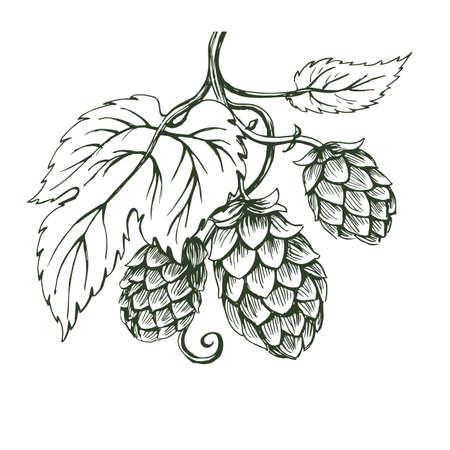 Outline vector sketch of hops branch 矢量图像
