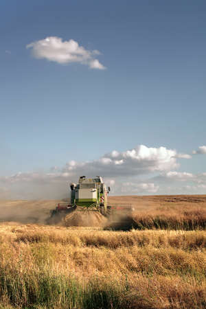 Combine harvester on the wheat field harvesting Stock Photo