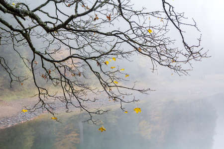 A branch of a tree with flying yellow leaves in a fog above the lake, autumn background.