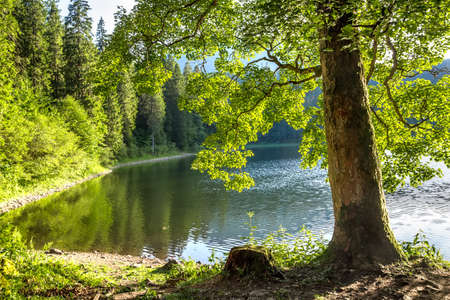 A tree trunk with bright green foliage on the shore of the lake Stock Photo