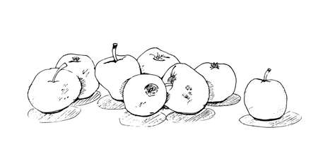 Sketch freehand, delicious juicy apples with shadow