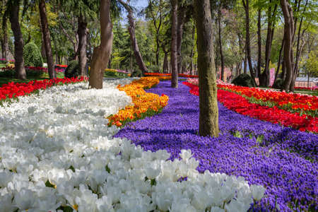 Flower arrangements in the spring park Emirgan at the tulip festival in Istanbul