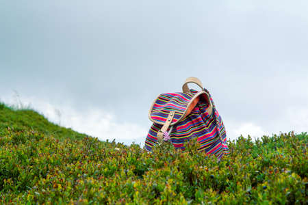 Bright young girls backpack in the grass blueberries in the Norway mountains, vacation concept