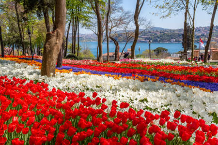 Bright colorful tulip flower beds in the tulip festival Emirgan Park, Istanbul, Turkey Stockfoto