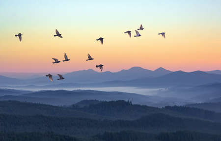 Foggy morning in the mountains with flying birds over silhouettes of hills. Serenity sunrise with soft sunlight and layers of haze. Mountain landscape with mist in woodland in pastel colors Stockfoto