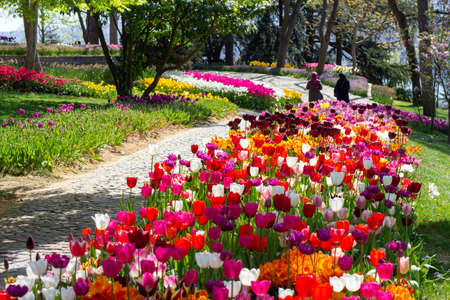 Flower beds with multicolored tulips in the tulip festival Emirgan Park, Istanbul, Turkey Stockfoto