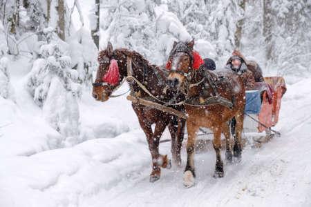 Cavalli con slitte su una strada invernale innevata nella foresta Archivio Fotografico