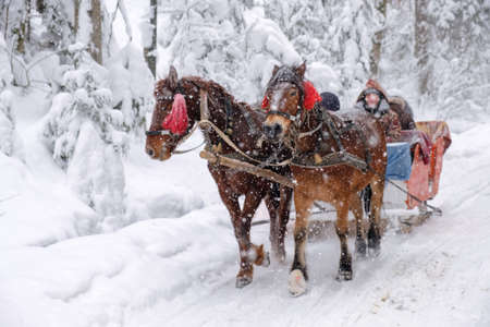 Horses with sleighs on a snowy winter road in the forest