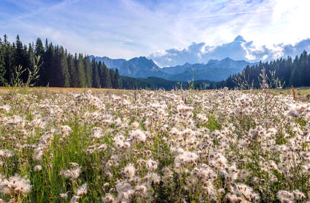 Landscape with meadow herbs close-ups, Wonderful view to mountains in the national park Durmitor in Montenegro, Europe.