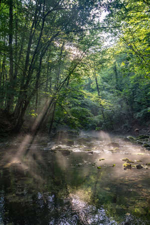 Forest natural landscape, sunbeams in foliage over the river