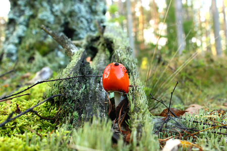 A poisonous mushroom with a red hat