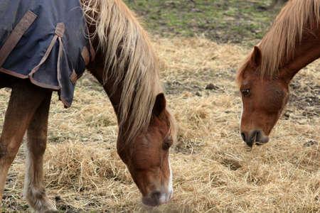 dorset: Abstract Grazing Horses Dorset
