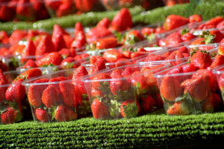 wimbledon: Abstract Colourfull Strawberries
