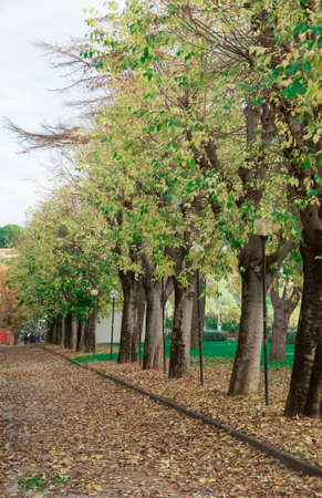 sky brunch: landscape of trees in autumn season