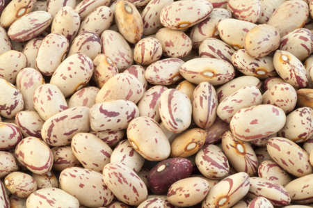 pinto beans: beautiful macro of colored pinto beans