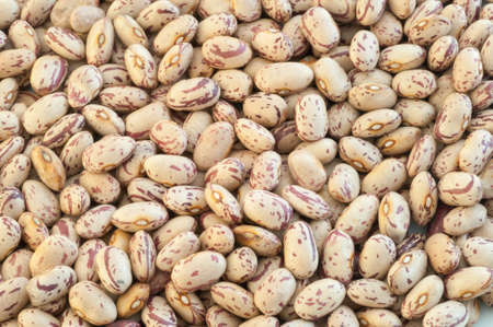 borlotti beans: beautiful macro of colored pinto beans