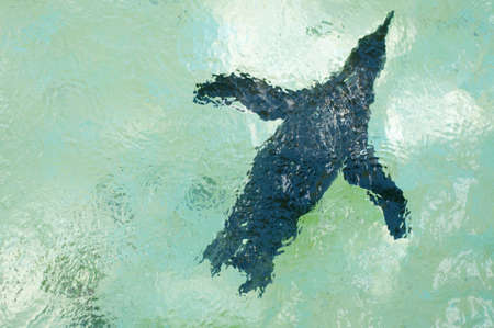 fat bird: african penguin in a swimming pool