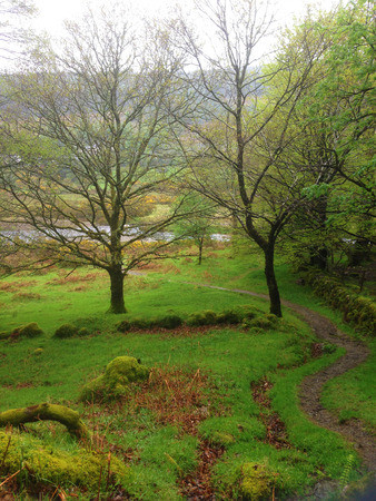 Pad door het bos in Ierland Stockfoto