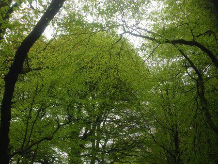 Heldergroene boomtoppen