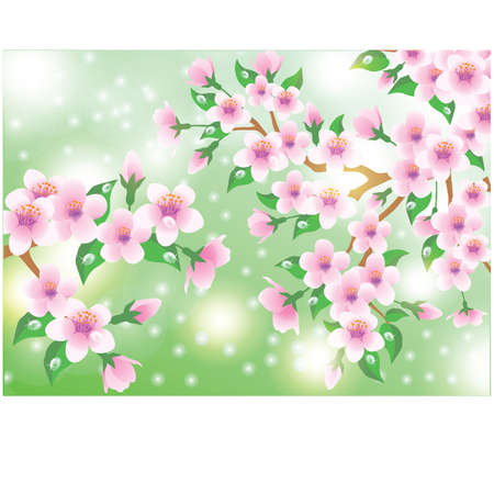 Spring card with Sakura flowers Vector